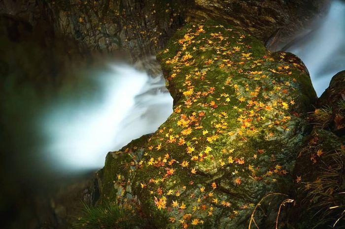 Autumn Leaves Water River Japan Nature Fall Rocks