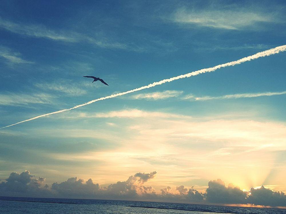 Flying Vapor Trail Travel Cloud - Sky Sky No People Dramatic Sky Outdoors Sunrise Seagull Seagulls And Sea Punta Mita Mexico