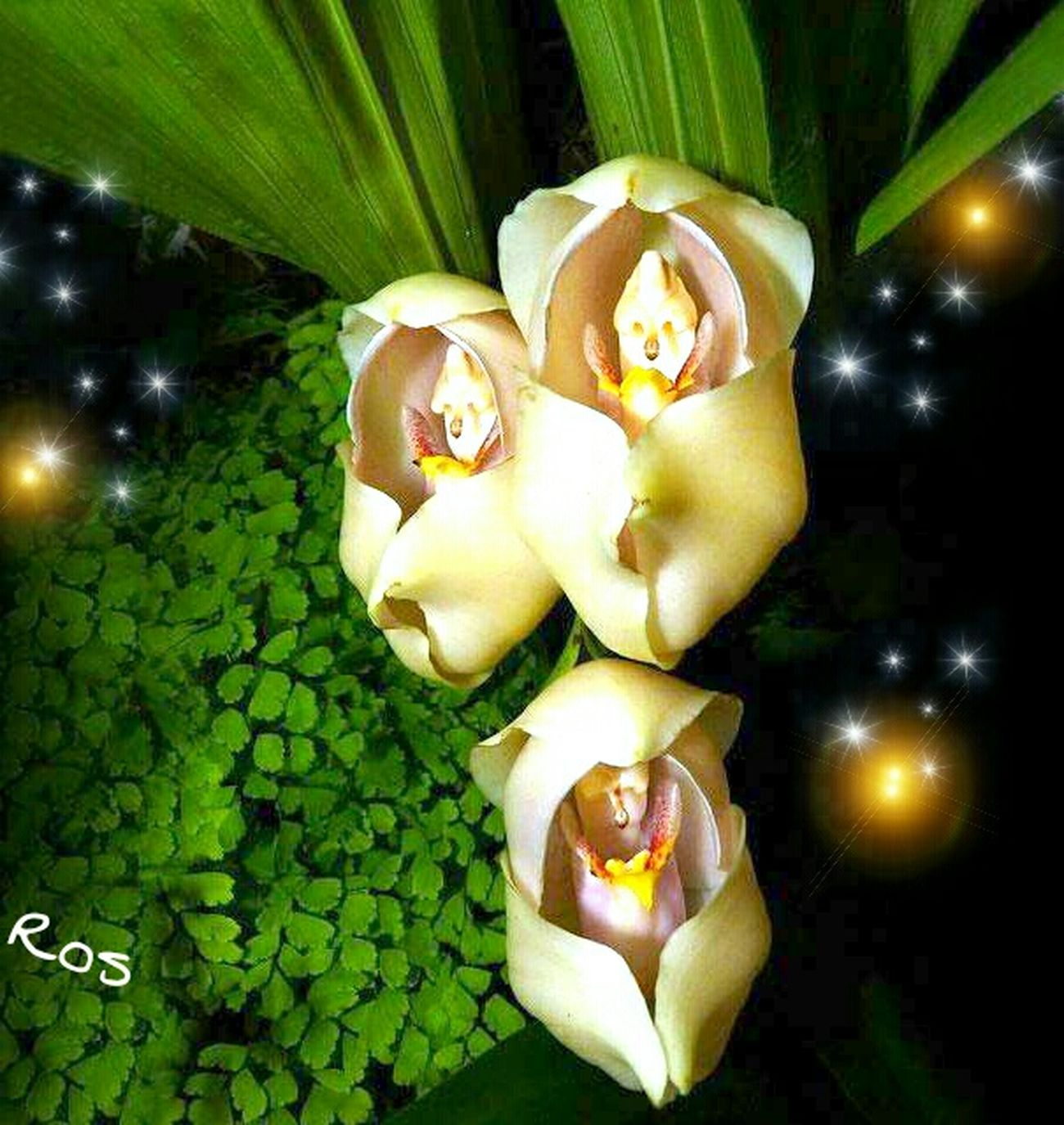 Orquideas Portrait Enjoying Life Hello World Beauty