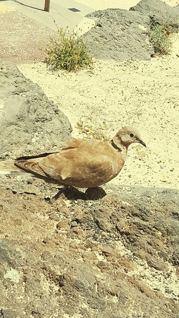 Check This Out Lanzarote Island Pidgeon Island