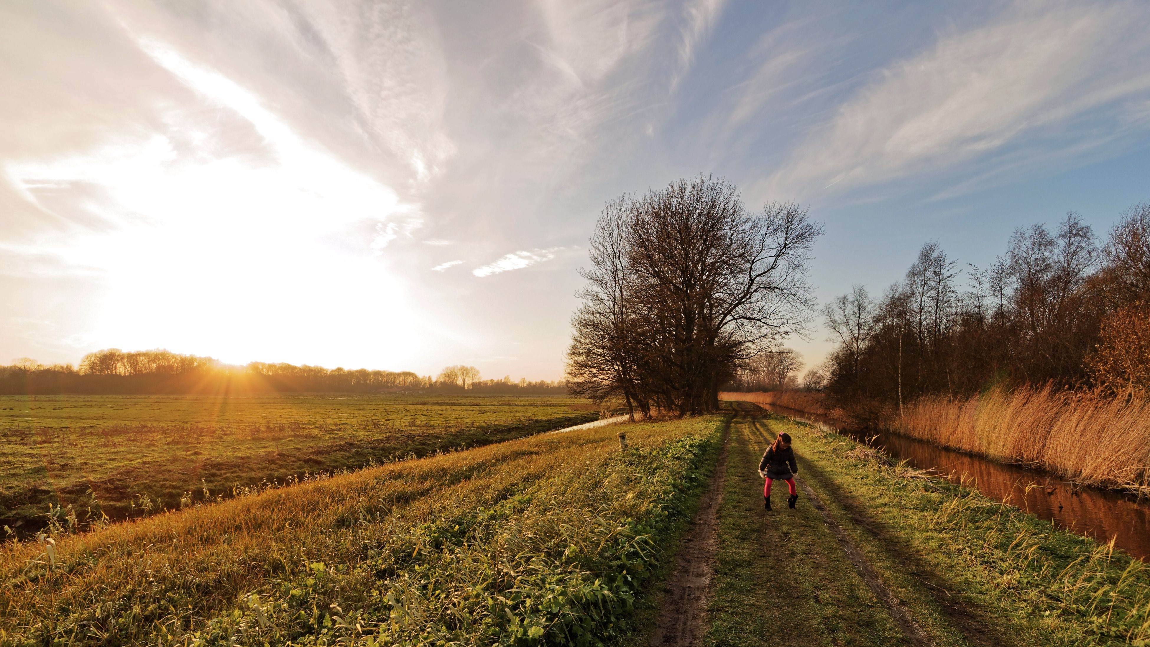 field, grass, lifestyles, leisure activity, sun, men, sky, tree, landscape, sunlight, walking, domestic animals, sunbeam, rural scene, person, nature, tranquility