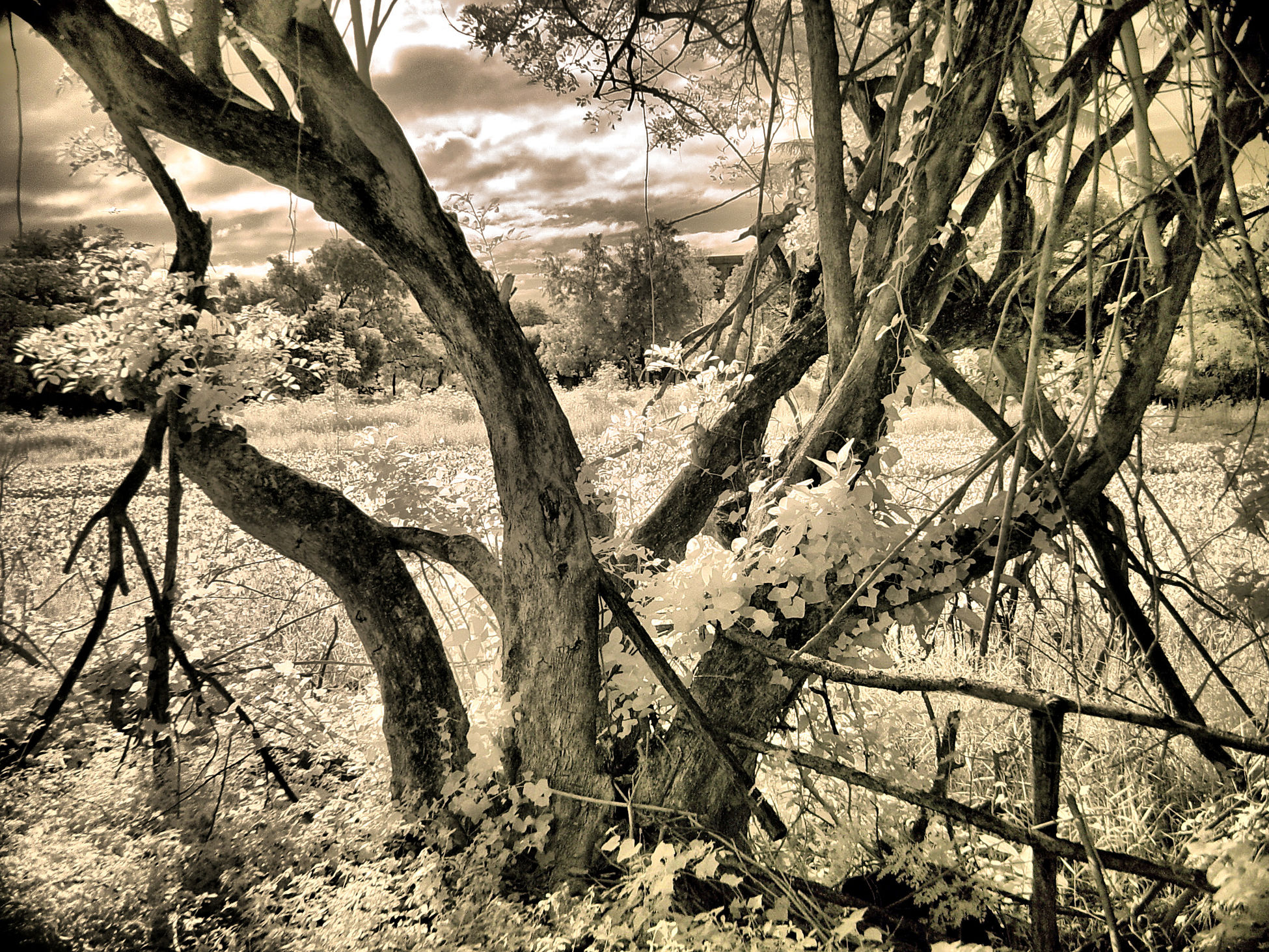Secret garden Tree Trunk Tree Nature Scenics Beauty In Nature Outdoors Infrared