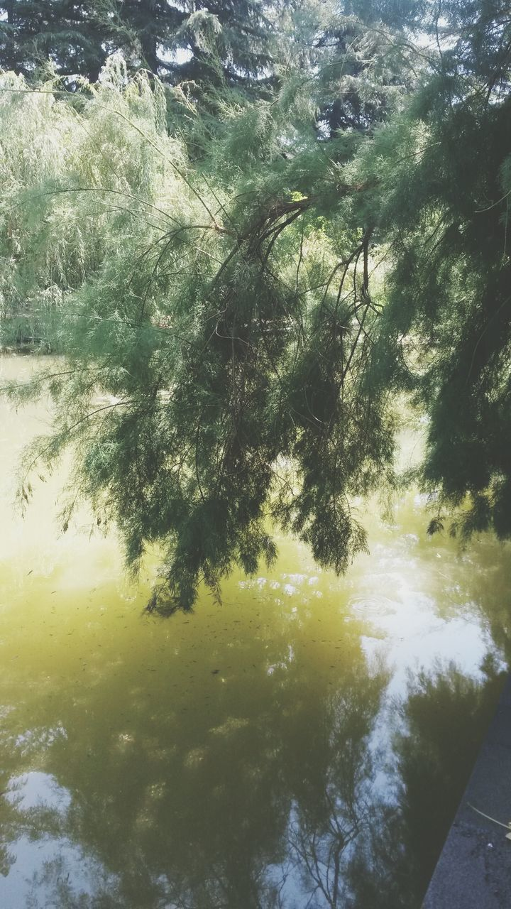 nature, water, outdoors, beauty in nature, day, no people, tranquil scene, tranquility, scenics, tree, sky