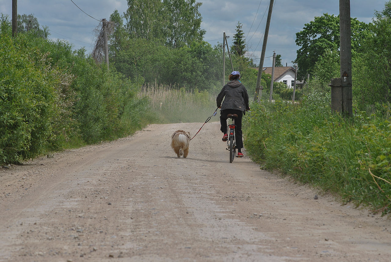 Candid Cart Road Cart Track Country Road Cycling Dirt Road Dog Domestic Animals Full Length Latvia Nostalgia One Person Outdoors People Pets Real People Real People, Real Lives Real Person Riding Road Road Dust The Way Forward Transportation Walking