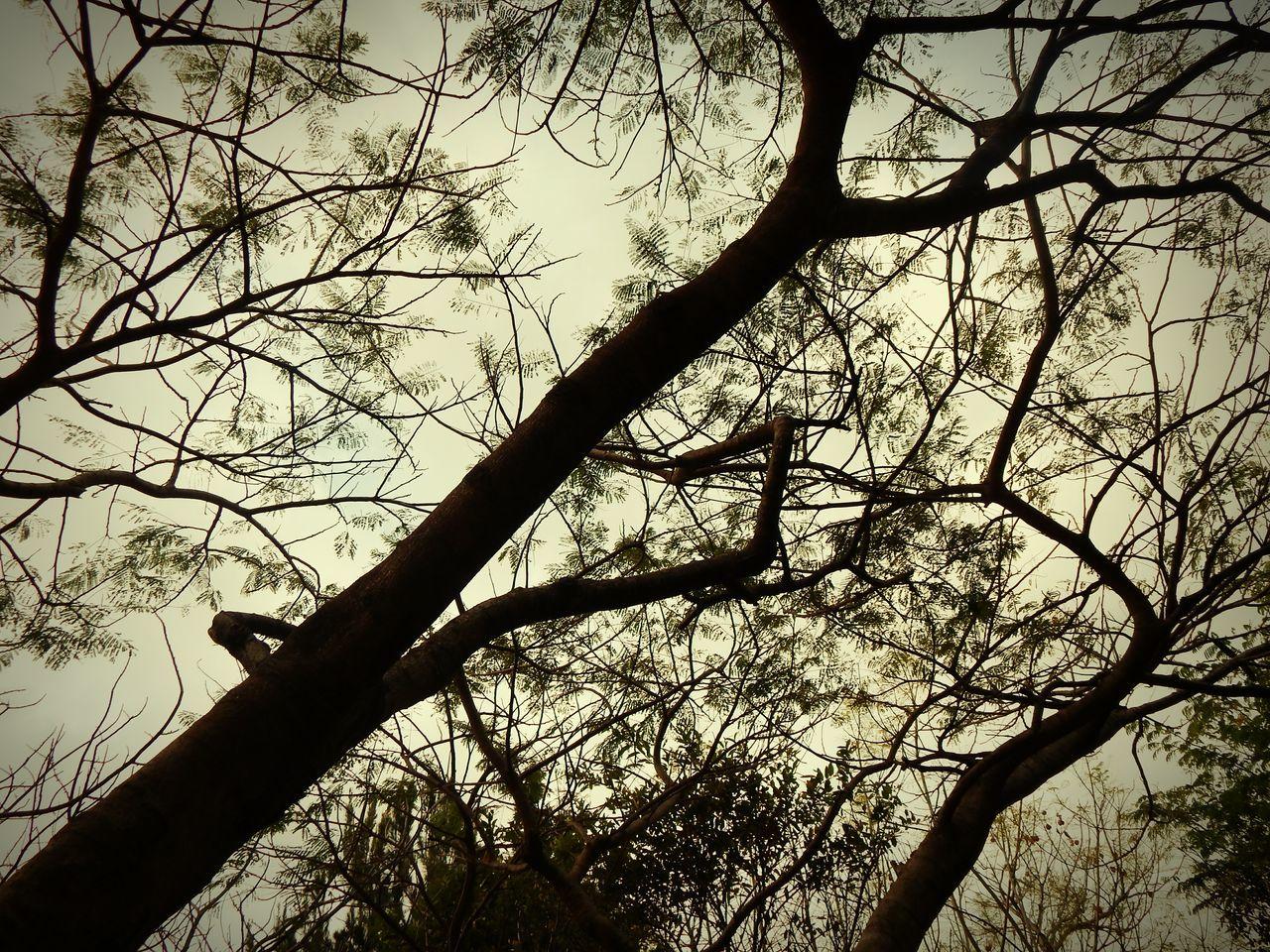 LOVE THE TREES. 💞 Trees And Sky LoveNatureAndMountain Costa Rica Enjoying Life Photography Amazing Taking Photos Nikon Paradise