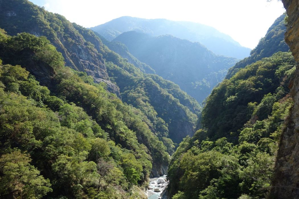Mountain Nature Lush Foliage Beauty In Nature Green Color Scenics Tree Tranquil Scene Forest Landscape Tranquility Outdoors Freshness No People Day Taroko National Park Taiwan
