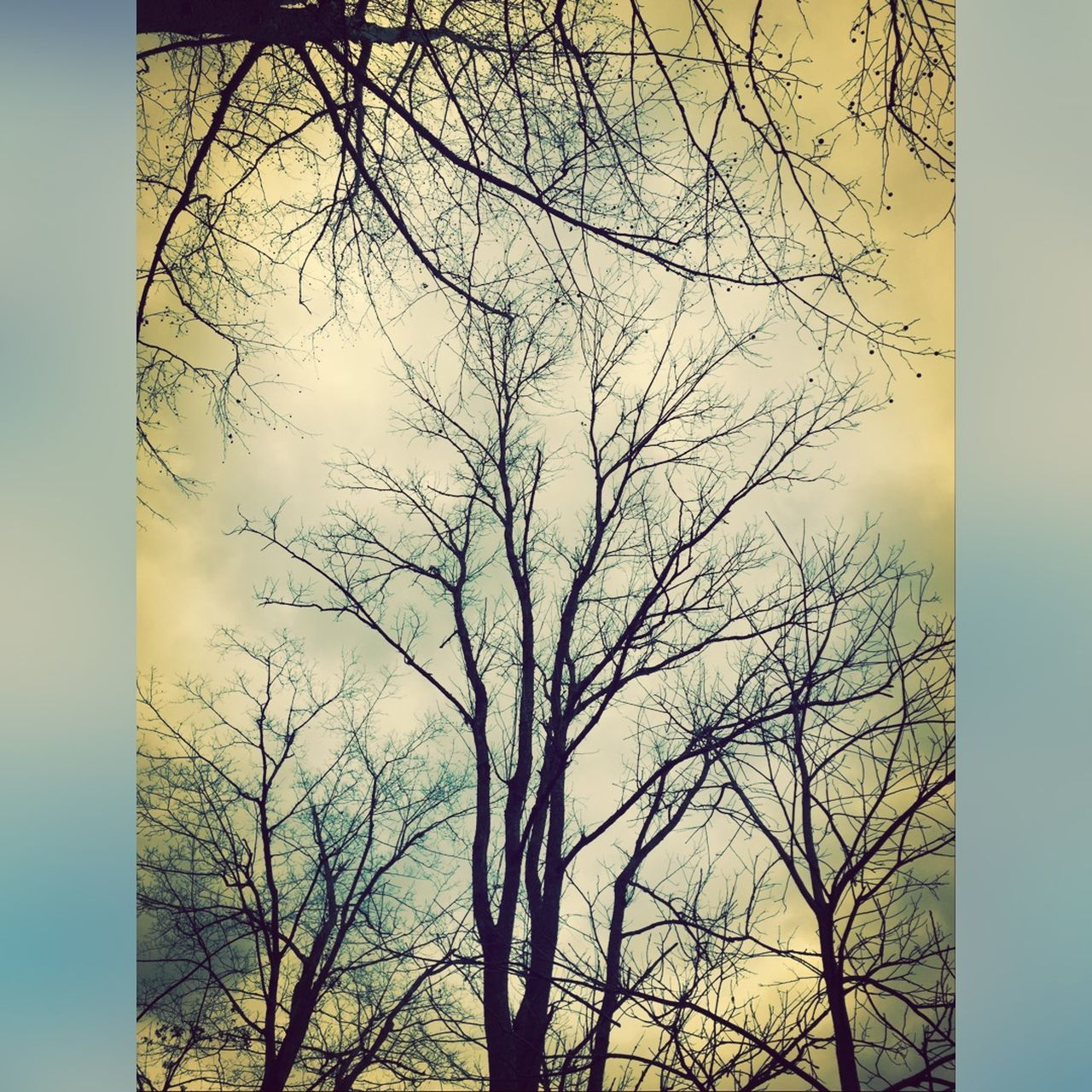 bare tree, tree, branch, no people, sky, nature, tree trunk, outdoors, low angle view, day, beauty in nature