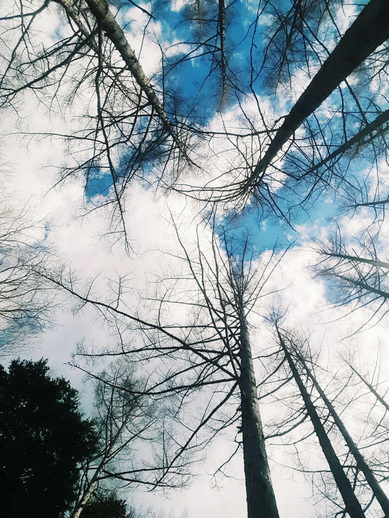 Japan 黑部立山 黑部峽谷 Japan Photography Tree Nature Sky Cloud - Sky First Eyeem Photo