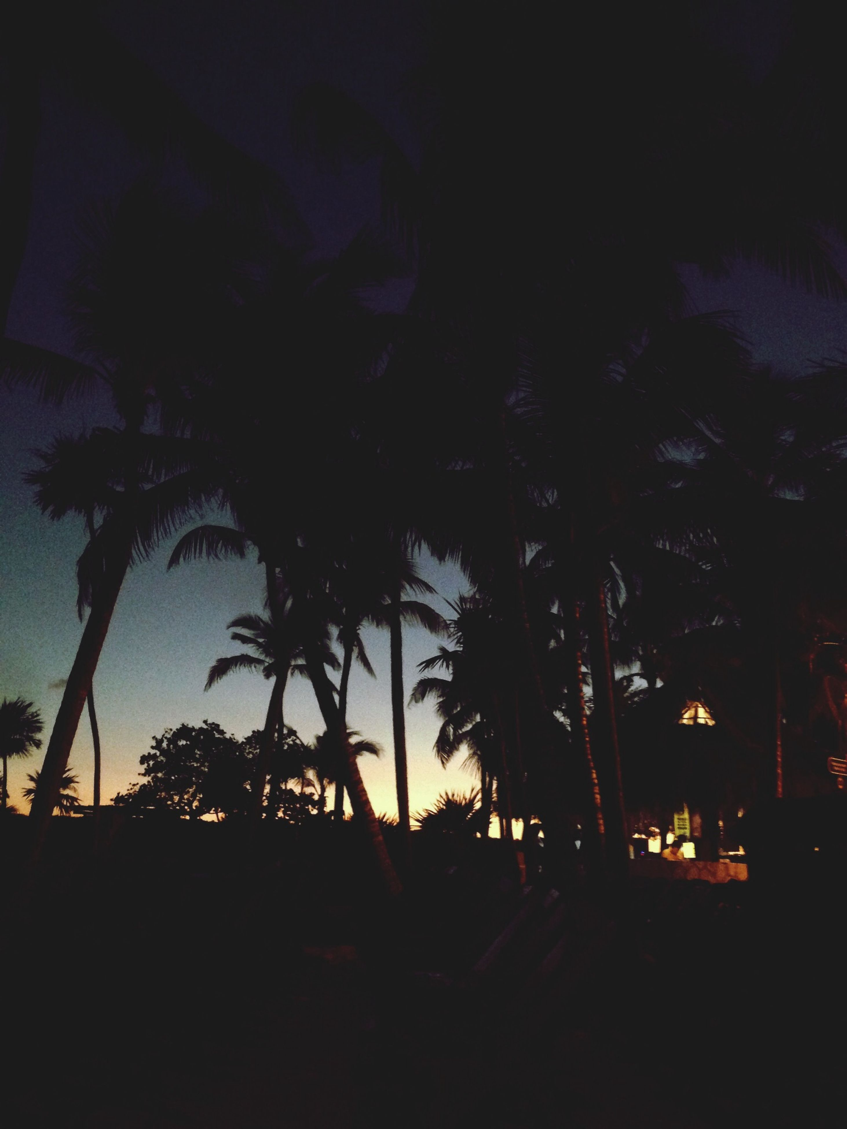 silhouette, tree, night, palm tree, dark, growth, sunset, sky, nature, tranquility, beauty in nature, illuminated, dusk, tranquil scene, branch, no people, outdoors, scenics, low angle view, outline