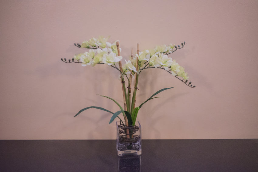 centered. Beauty In Nature Bouquet Close-up Day Flower Flower Head Fragility Freshness Growth Indoors  Nature No People Plant Vase