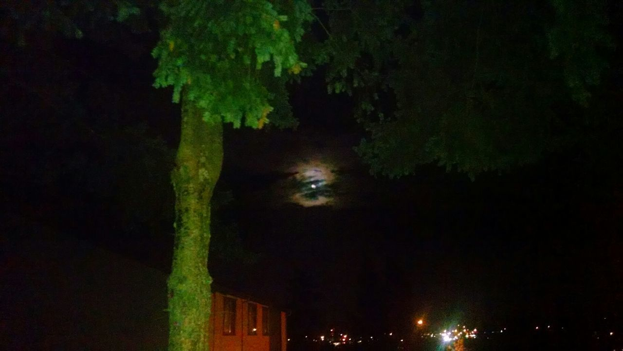 night, green color, tree, illuminated, outdoors, no people, nature, sky, beauty in nature