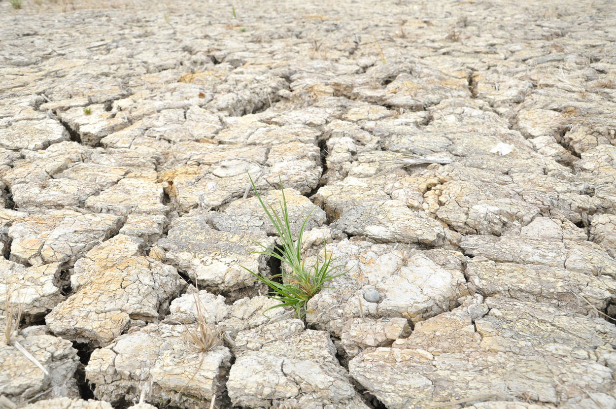 full frame of soil crack during drought season Crack Day Drought Dry Earth Fullframe Gap Hole Nature Outdoors Plant Season  Separate Soil Water