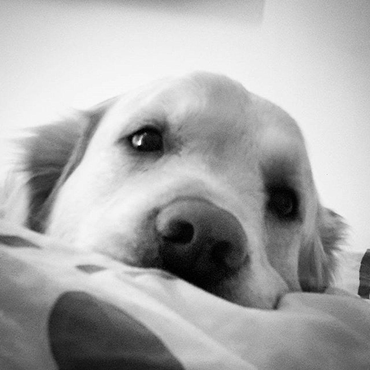 Gunaydinnnnn ❤ Bonjour❤ Good Morning ❤