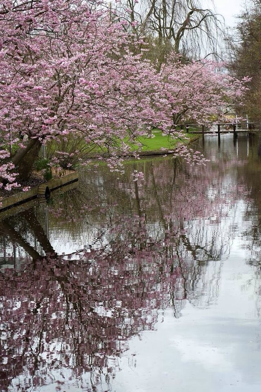 tree, beauty in nature, blossom, nature, flower, cherry tree, branch, springtime, growth, no people, lake, tranquility, outdoors, water, day, scenics, reflection, tranquil scene, fragility, freshness, sky