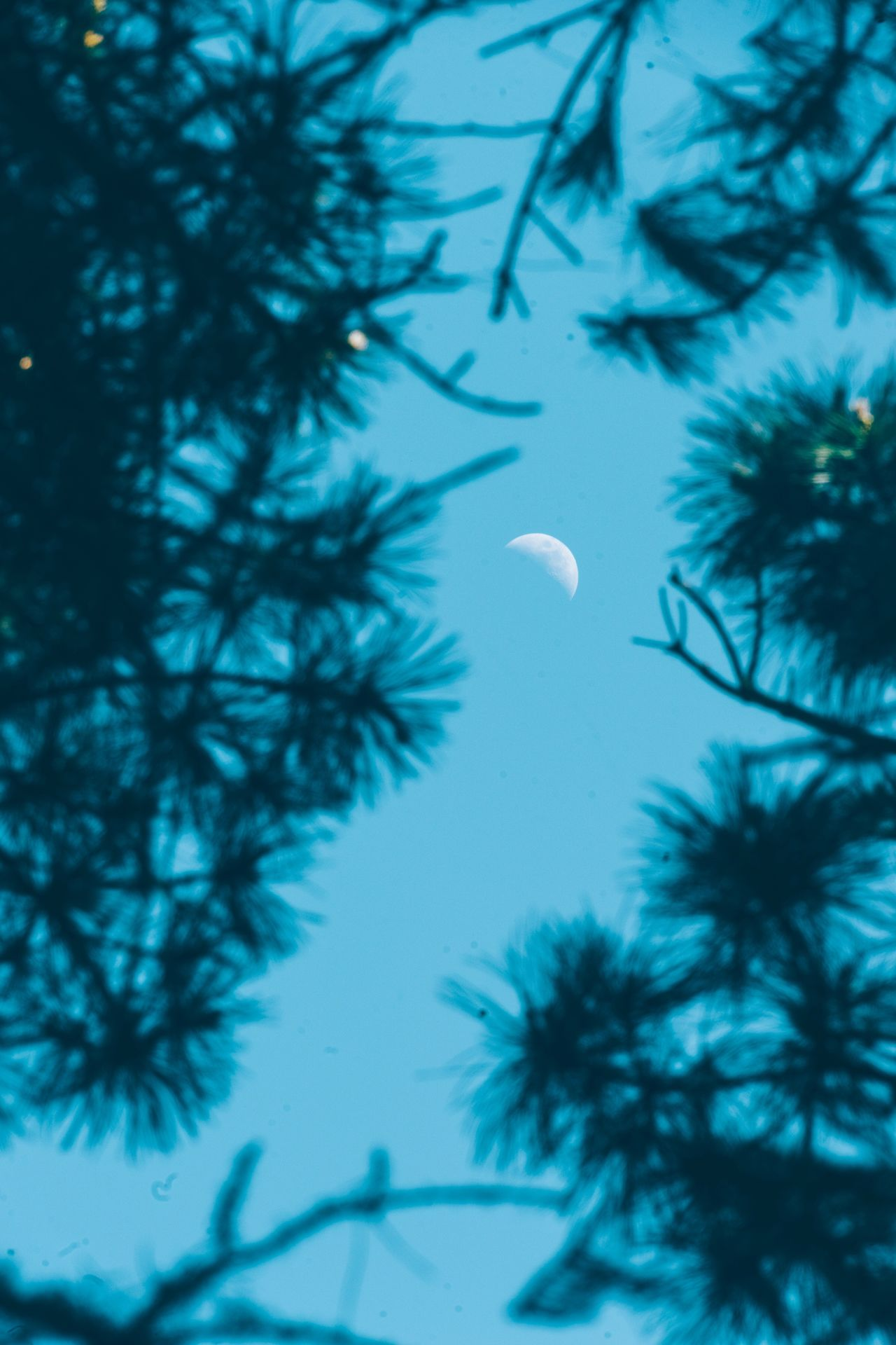 Moon Tree Nature Low Angle View Beauty In Nature Half Moon Crescent No People Branch Sky Scenics Outdoors Night Astronomy Close-up Vintage Hike Rural Poetry