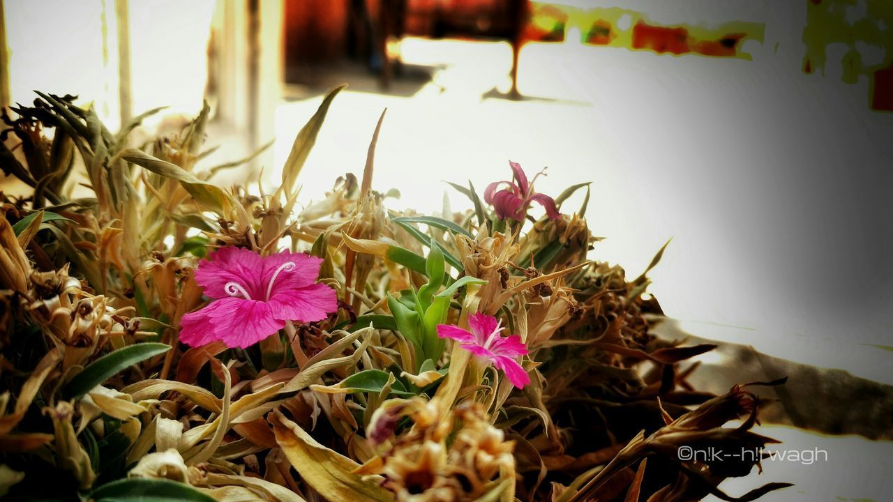 Flower Plant Nature Flower Head Freshness Close-up Beauty In Nature Fresh