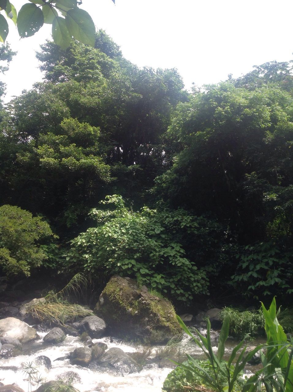 tree, nature, growth, lush, forest, no people, beauty in nature, tranquility, plant, water, outdoors, scenics, day, waterfall