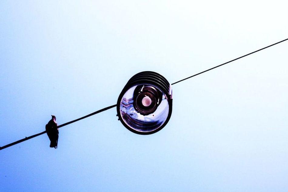#birds #Braunschweig #germany #skylovers #summer #summertime #sun #TagsForLikes.com #hot #sunny #warm #fun #beautiful #sky #clearskys #season #seasons #instagood #instasummer #photooftheday #nature #TFLers #clearsky #bluesky #vacationtime #weather #summerweather #sunshine #summertimeshine Day Sky EyeEmNewHere