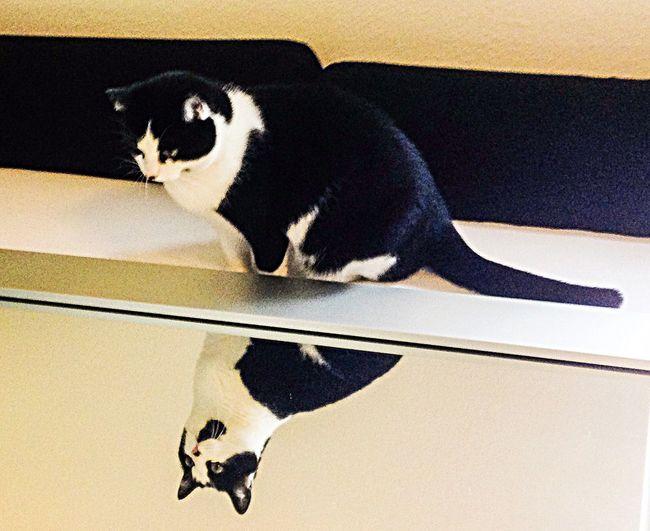 Mirror Through The Mirror Cat Cats Cat♡ Spieglein Spieglein An Der Wand.. Beauty