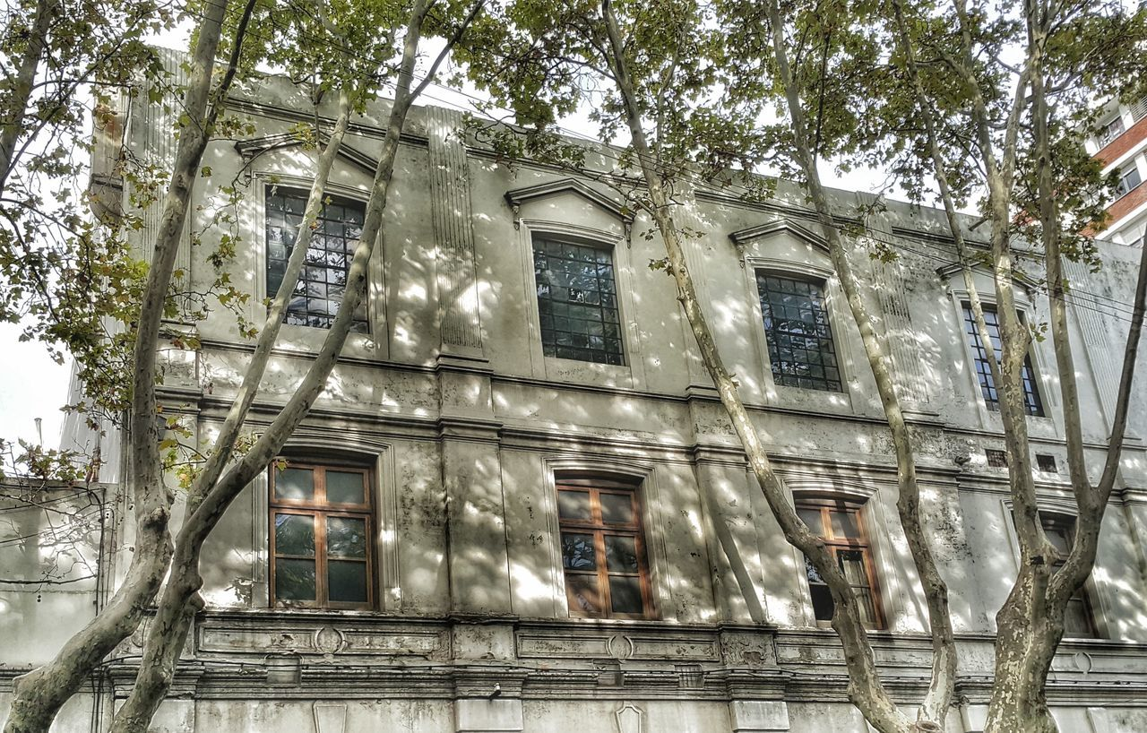building exterior, architecture, window, low angle view, no people, tree, outdoors, day, built structure