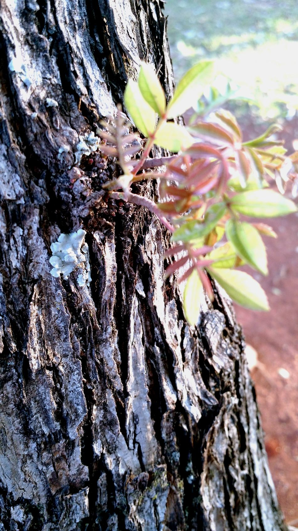 Tree Little Plant Little Plants Green Brown Brown Nature Life Trunk Plant On Tree Plant On Trunk