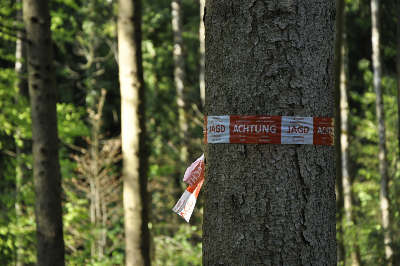 tree trunk, tree, forest, day, text, focus on foreground, no people, nature, outdoors, communication, marking, hanging, close-up