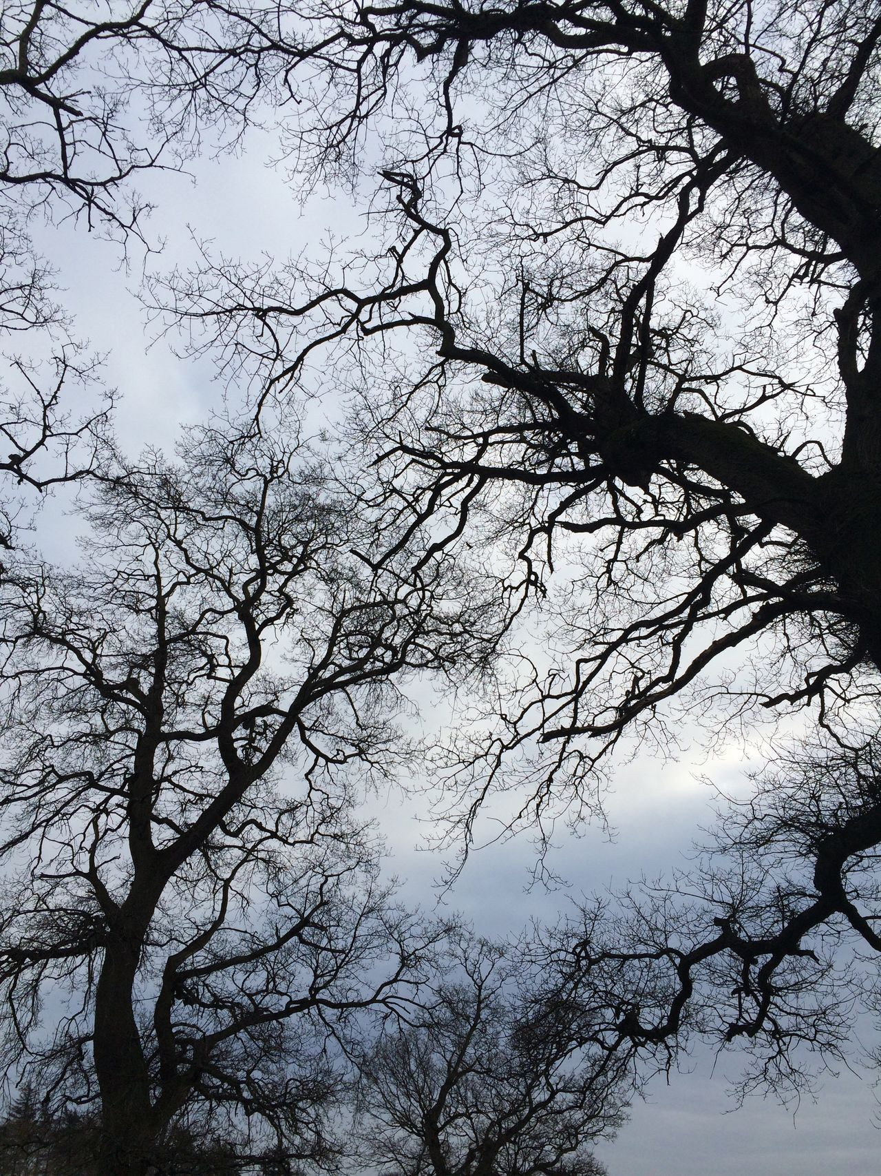 Branches Sky And Trees The Purist (no Edit, No Filter) IPhoneography Beautiful Nature