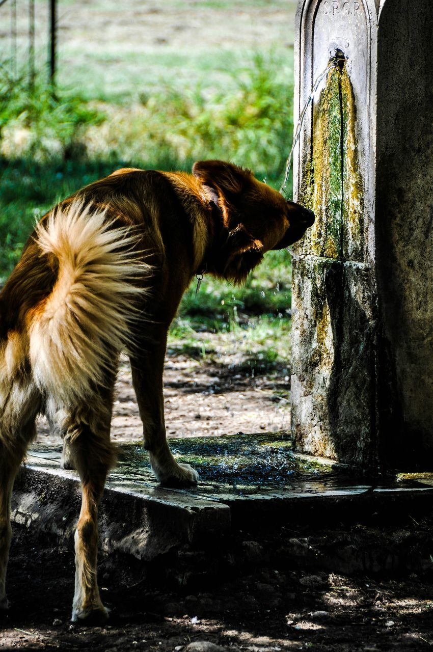dog, one animal, animal themes, domestic animals, pets, mammal, day, no people, standing, outdoors, close-up