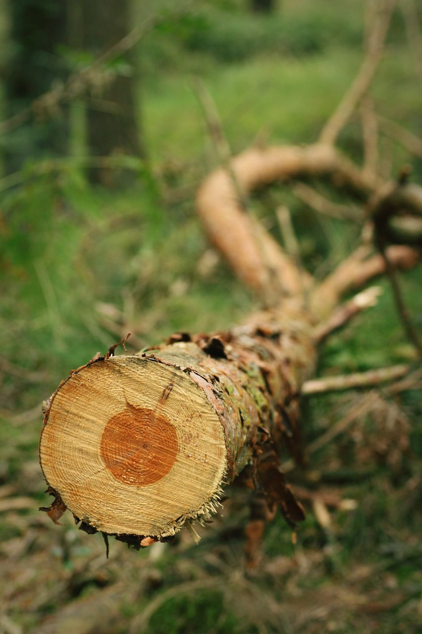 focus on foreground, no people, log, day, close-up, outdoors, wood - material, nature, tree