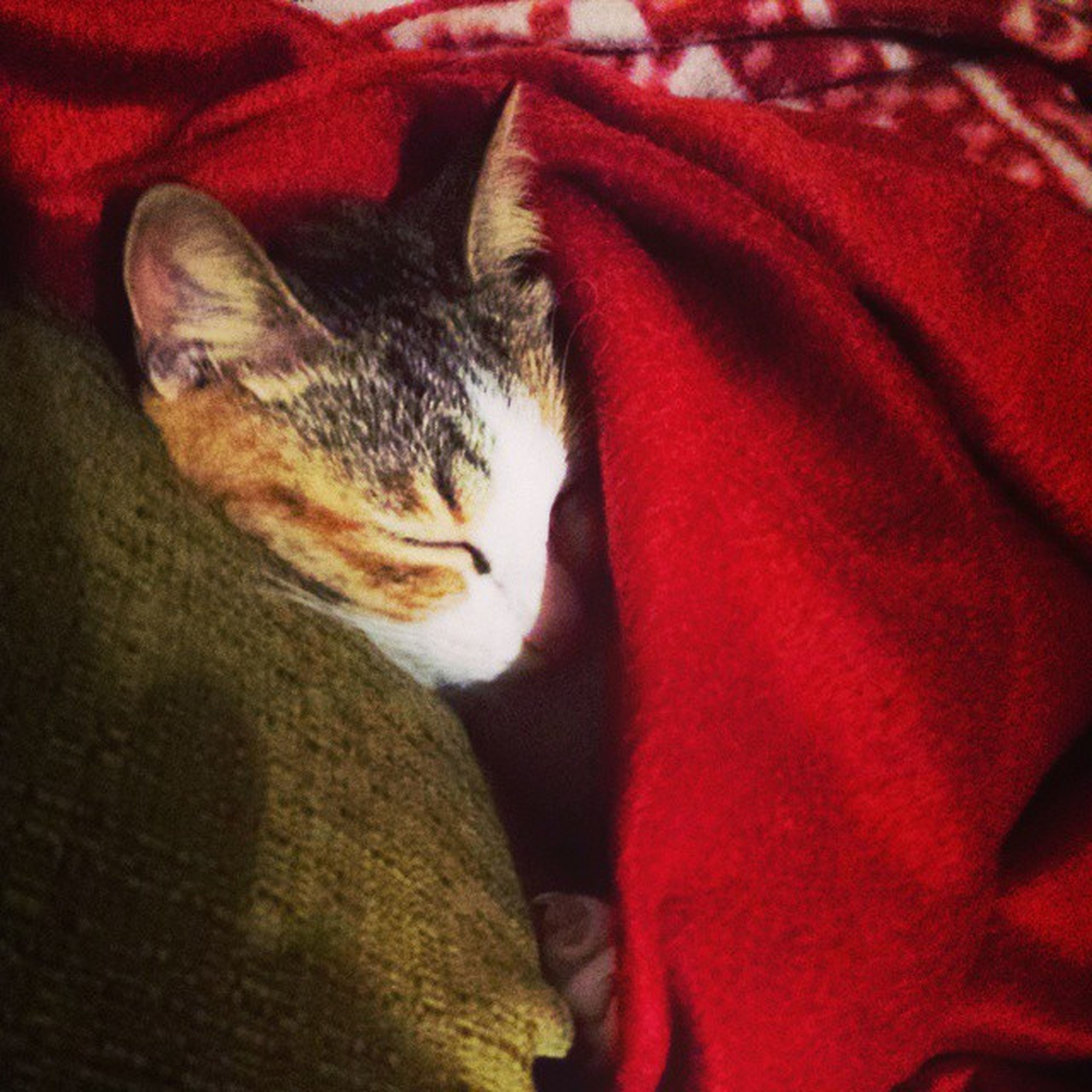 Come una bambina 😂 Chloe Cat Echilamuove Oziototale Relaxcat Sweet Friday Selfiegatto Family