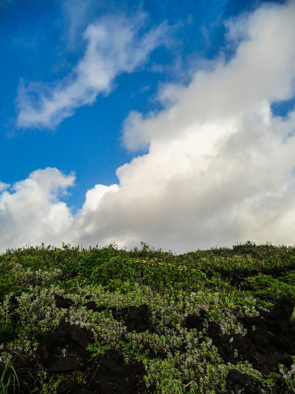 Blue Sky Blue Sky White Clouds Clouds And Sky Green Snd Sky Landscape_Collection Landscape_photography Nature Photography Nature_collection Sky And Clouds