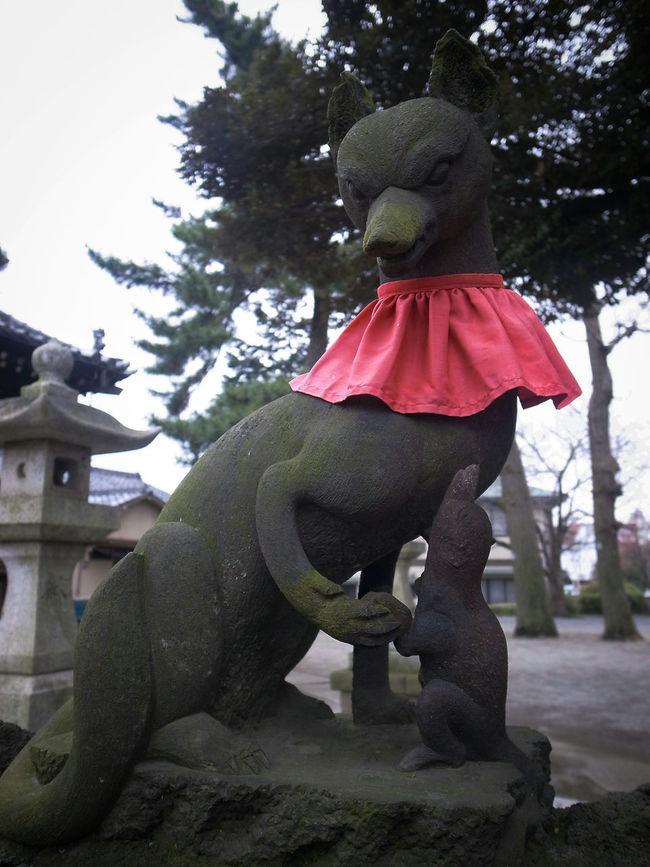 この狐は父親で前の写真は母親狐🐺先日新しい自転車を購入しようと自転車屋に行き、近くに稲荷があるからとぶらりと寄ってみたらこんなまさかの出会いが♬ 親子 狐 狛狐 稲荷神社 神社 Fox🐺 Stone Statue Japanese Shrine Hello World Walking Around Enjoying Life Street Snaps Lightroom Mobile Lightroom 2.0 For Android