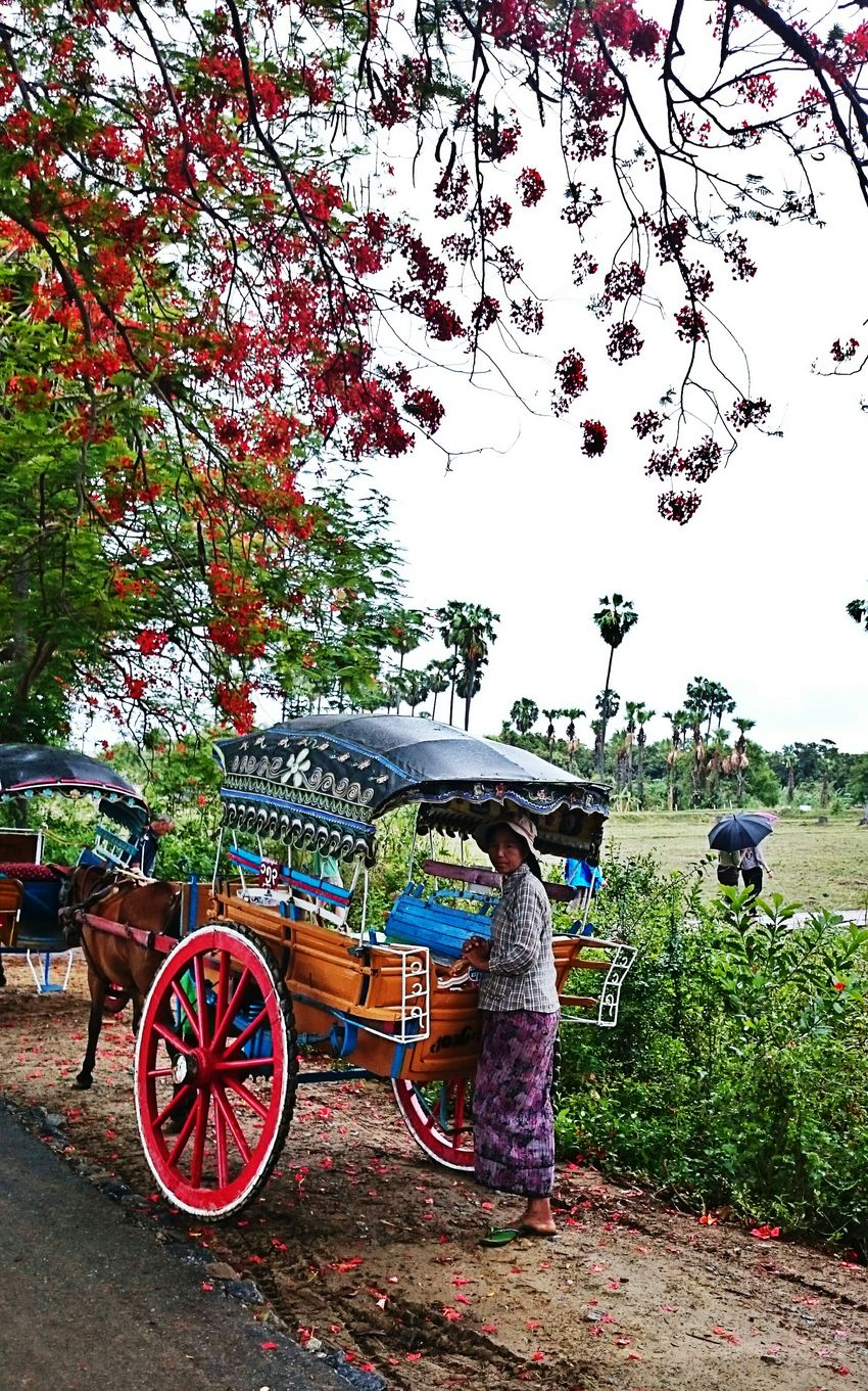 Myanmar Beautiful Place Wonderful_location Flowers, Nature And Beauty Streetphotography Treelovers Under The Tree Treescollection Burma Temple Kutschfahrt