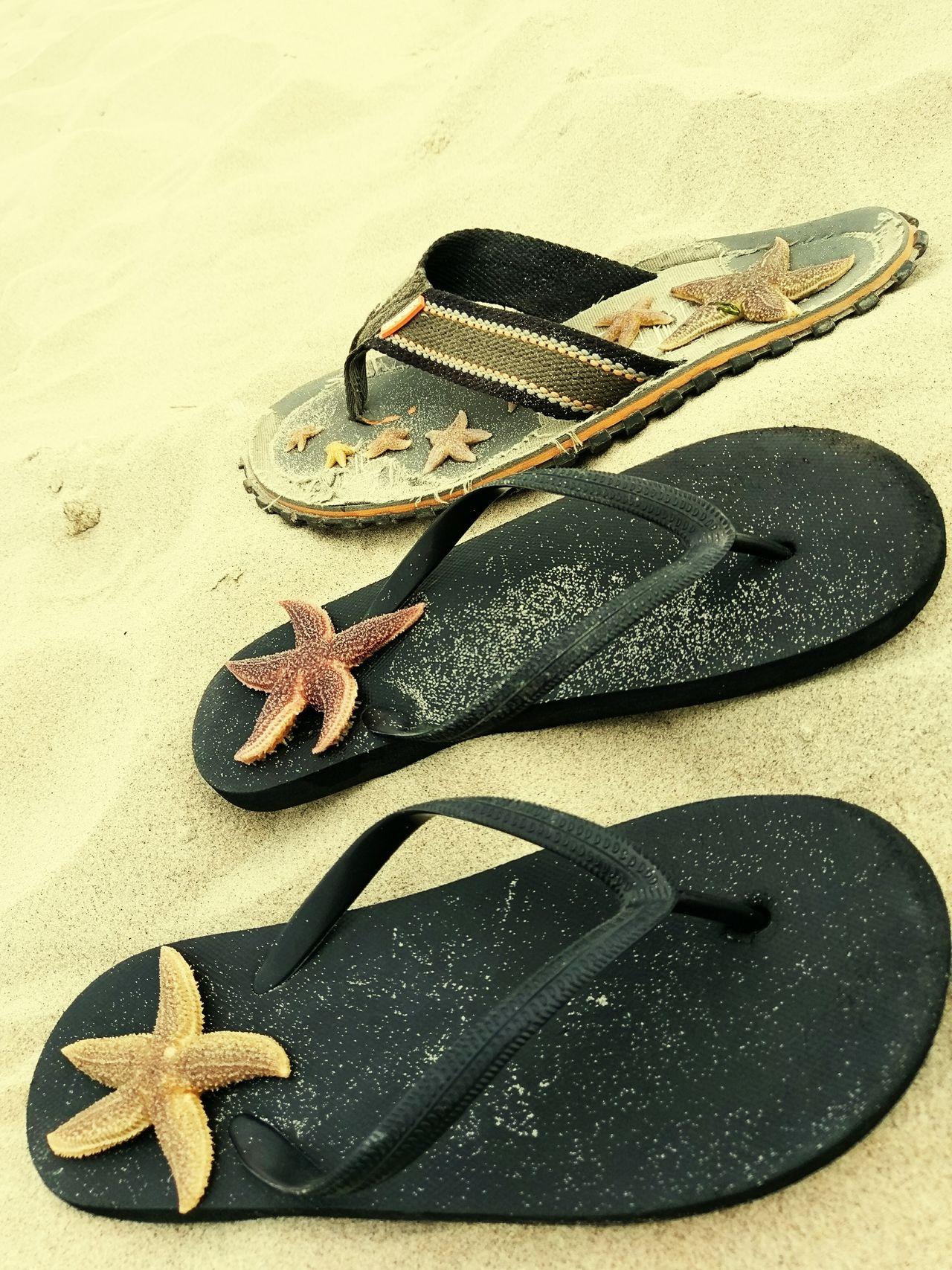 Beach Life Starfish  Texelstrand