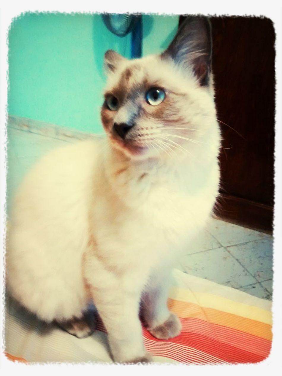 Lindo Gatito Cat ASAntonioSanchezRefaccionaria Zacatecas