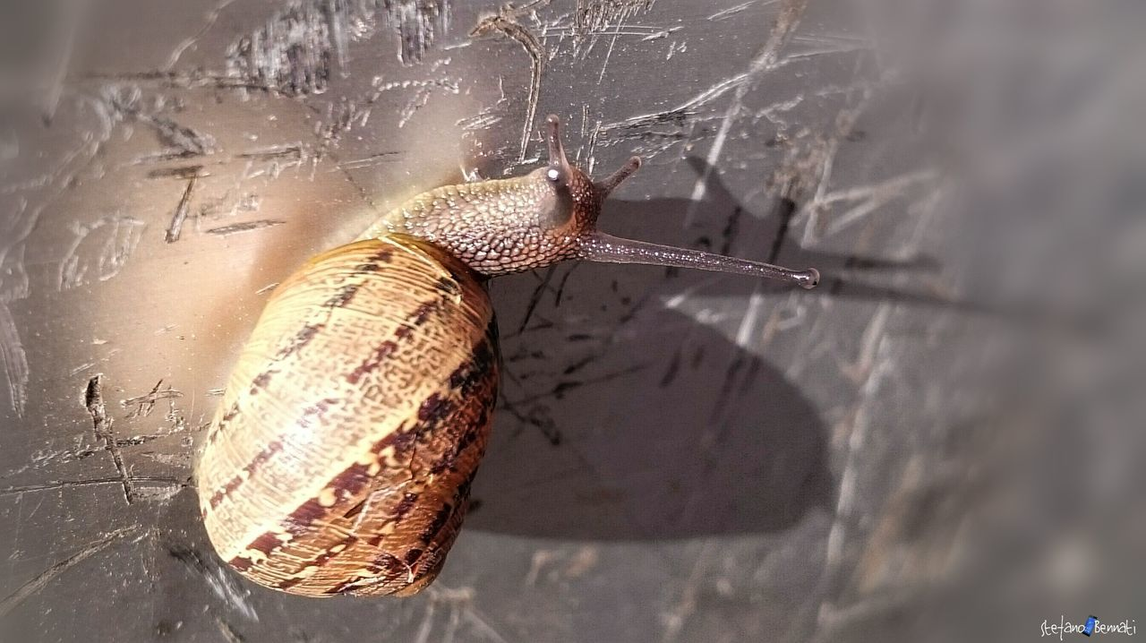 Snail Capture The Moment Z3 Xperia Animal Animal Love
