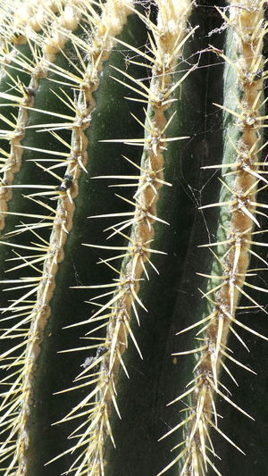 Don't touch me. Cactus Cactus Leaf Close-up Complexity Detail Growth Nature No People Outdoors Sharp Spiked