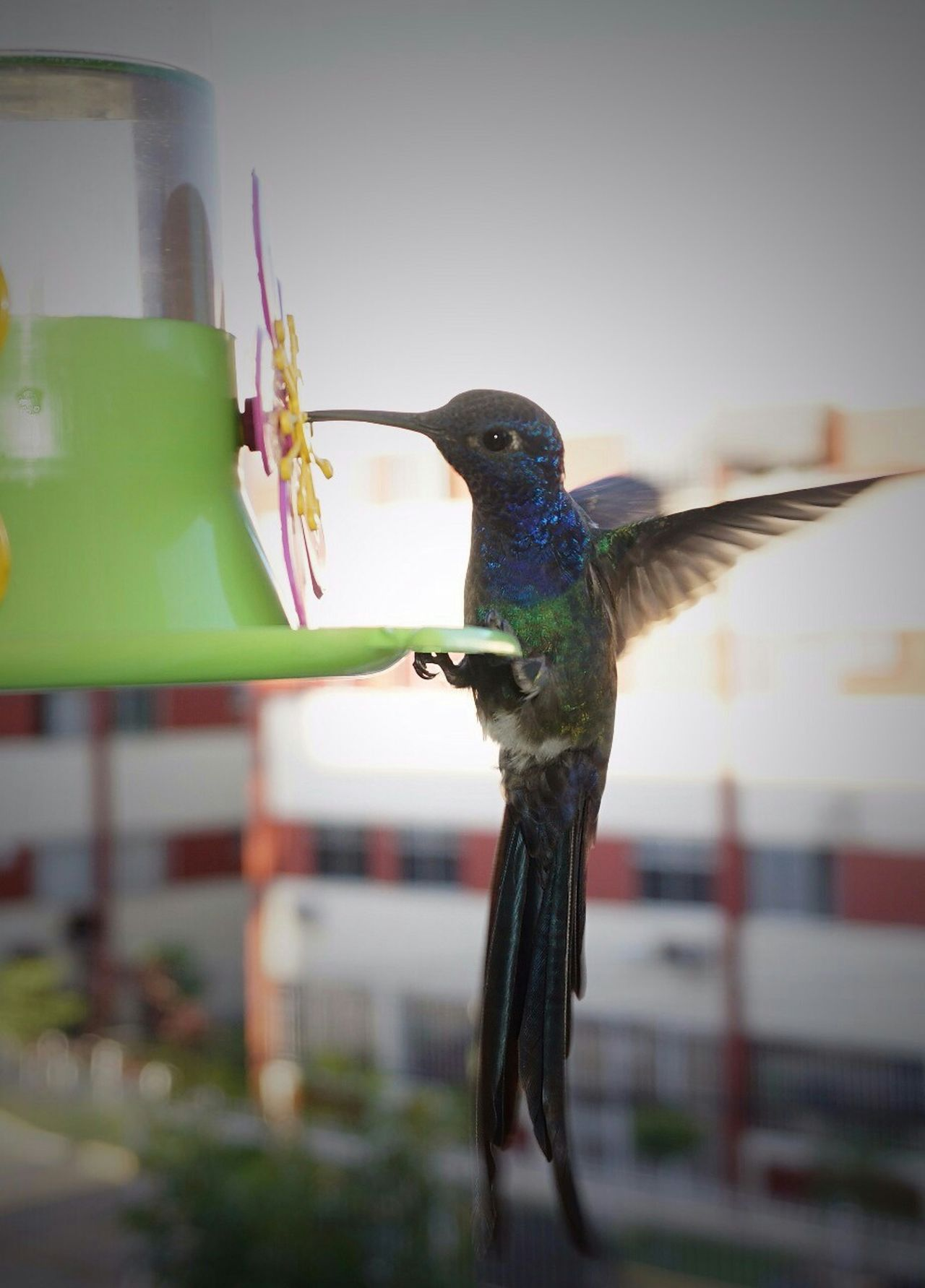 Beautiful stock photos of hummingbird, , Animal Themes, Animals In The Wild, Bird Feeder
