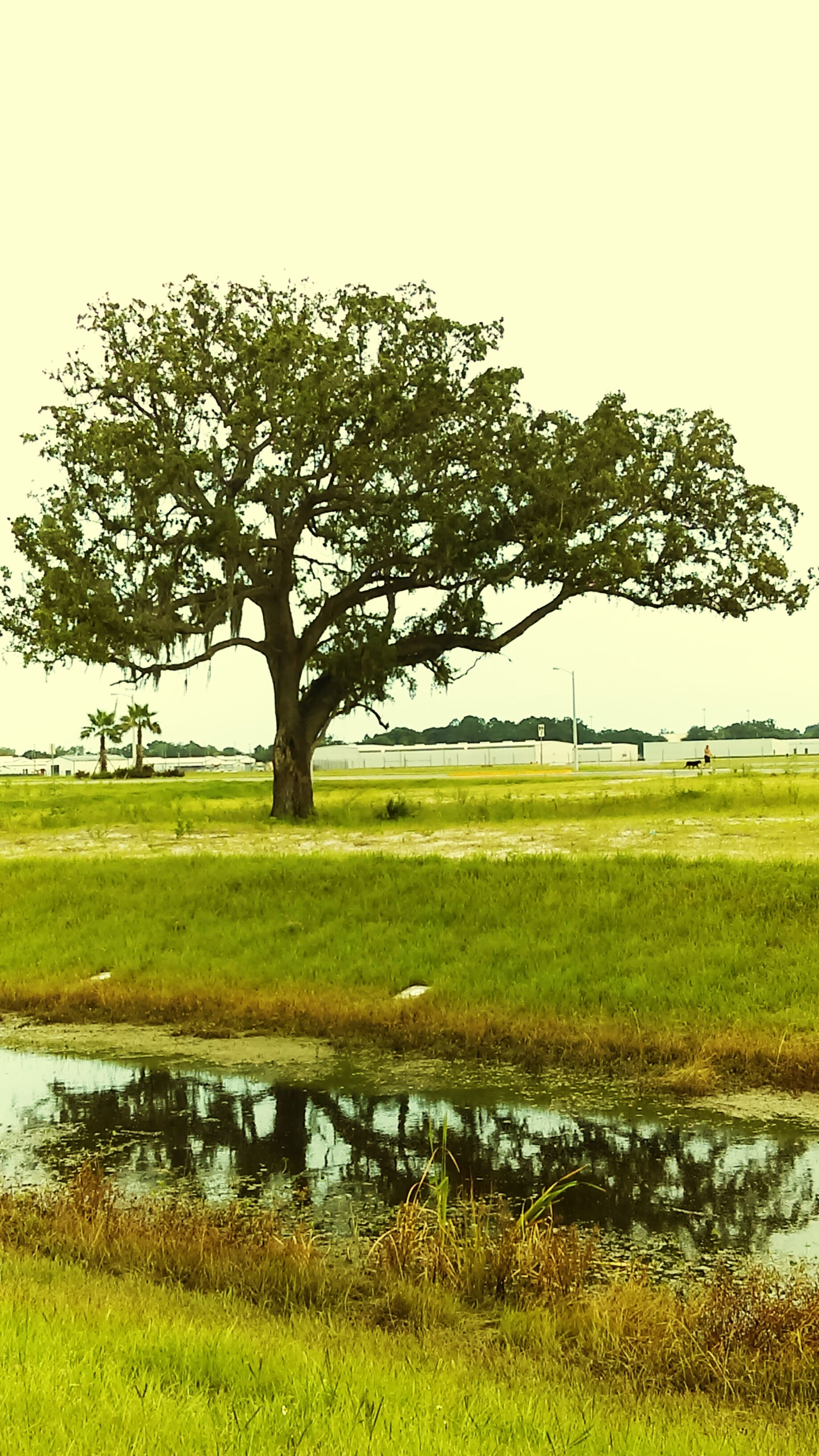 grass, tree, water, tranquility, tranquil scene, green color, field, grassy, nature, scenics, lake, landscape, beauty in nature, clear sky, bare tree, growth, branch, sky, day, reflection