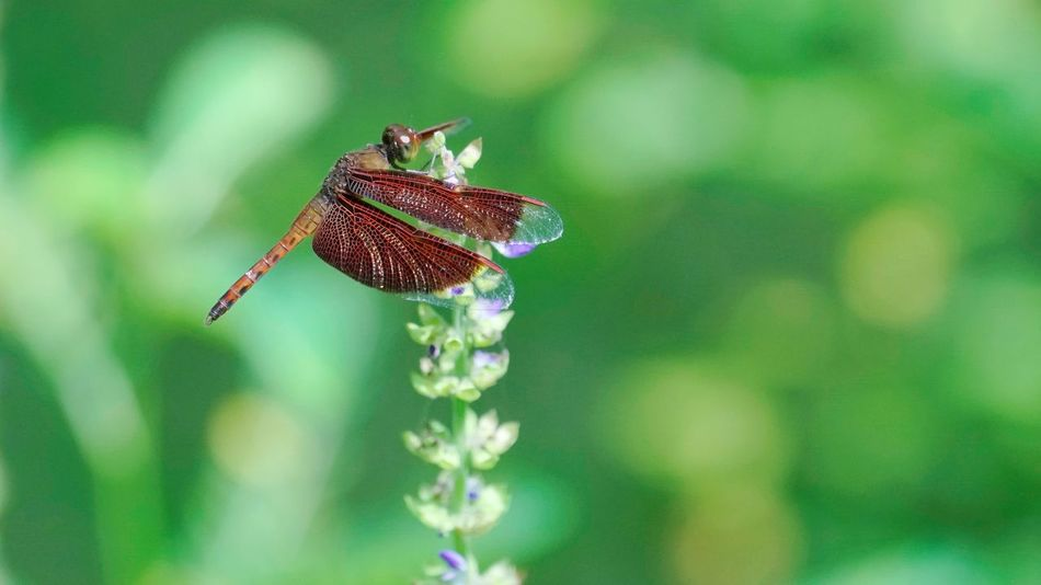Gragonfly Red Gragonfly Insect Nature Outdoors No People Close-up Plant Beauty In Nature Plant Freshness Wildlife Park Green Color