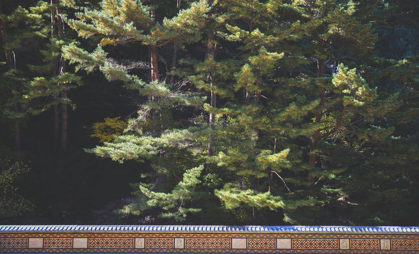 Backgrounds Close-up Day Growth Guinsa, Korea Monastery Nature No People Outdoors Tree Trees