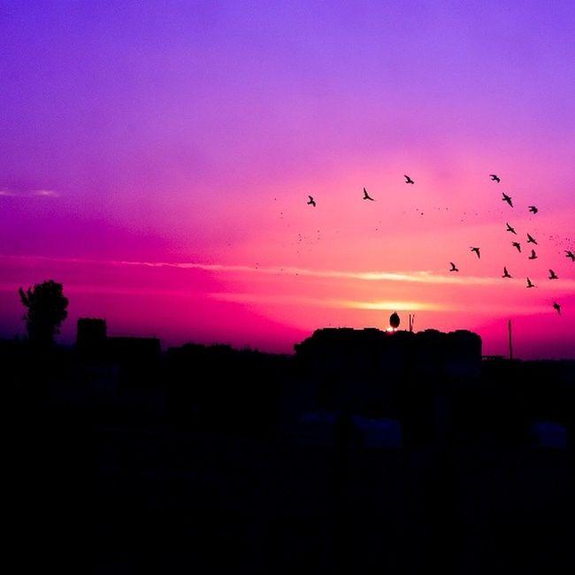 Sky Skyviewers Sky_masters Skymasters colorful colorfulsky sun sunset birds flying amman seeamman beamman sky_of_amman spiritofjordan discoveramman discoverjo tree beautifuljordan beautifulsky beautifulamman rj