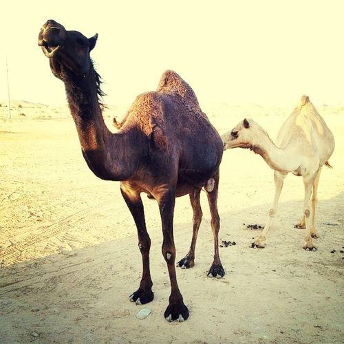 Kiss my arse. Dubai Dunes Sand Travel