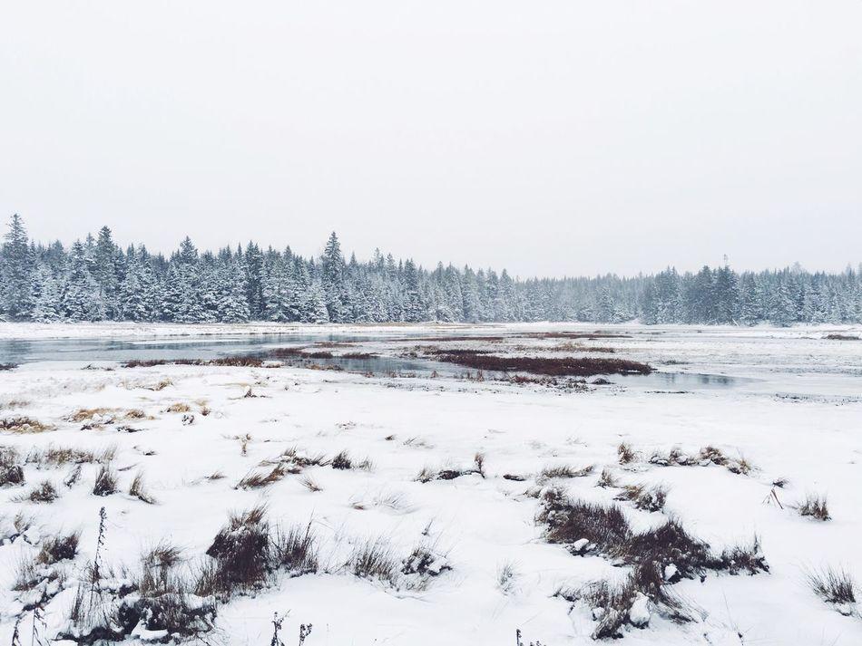 Snowed in Winter Maine