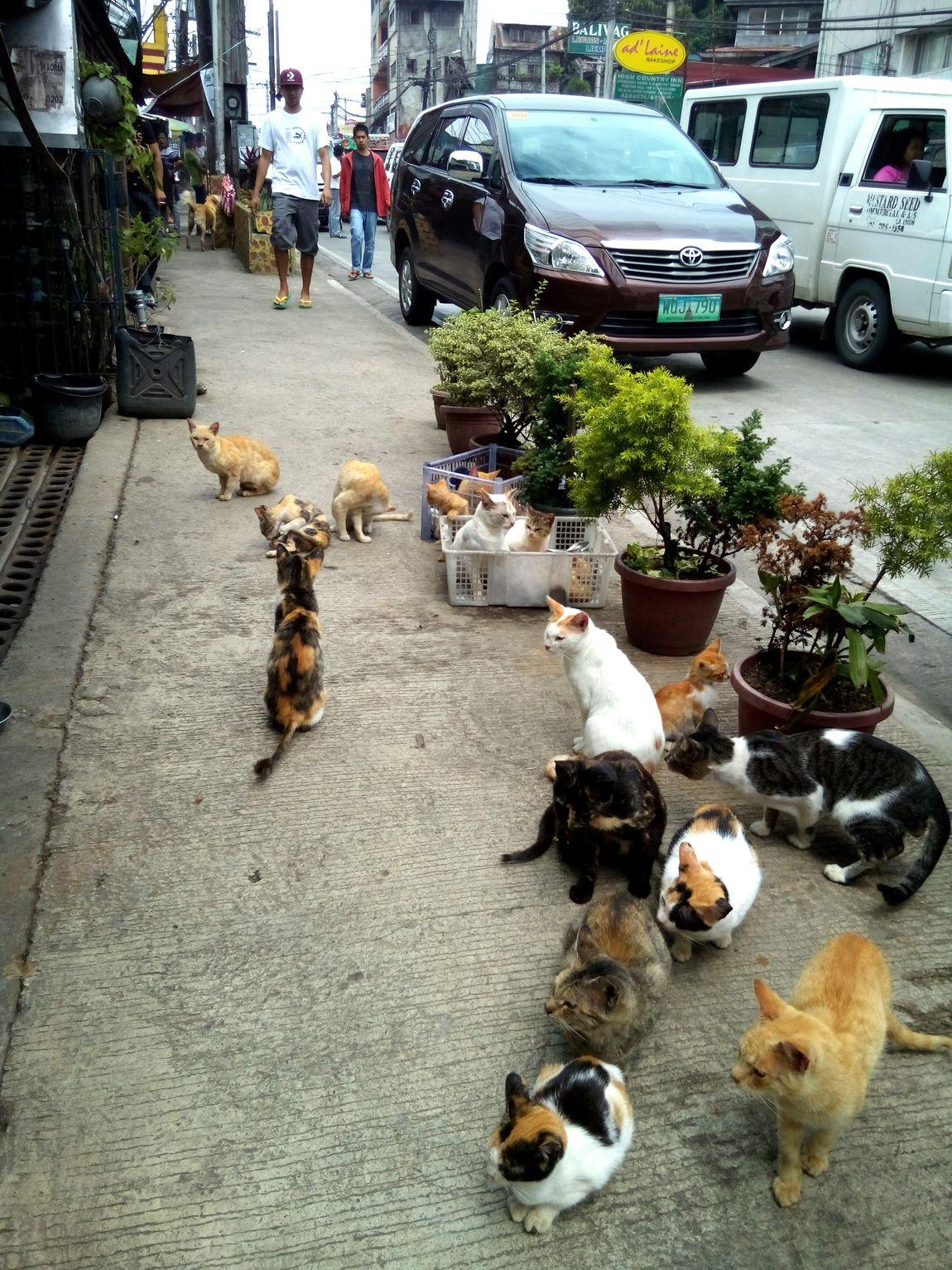 Cat Invasion Cats In The City Cats Lovers  Cats 🐱 Cats Of EyeEm Cat Lovers Nekostagram Neko