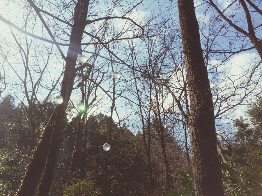 キラリ なんか好き 森の時間