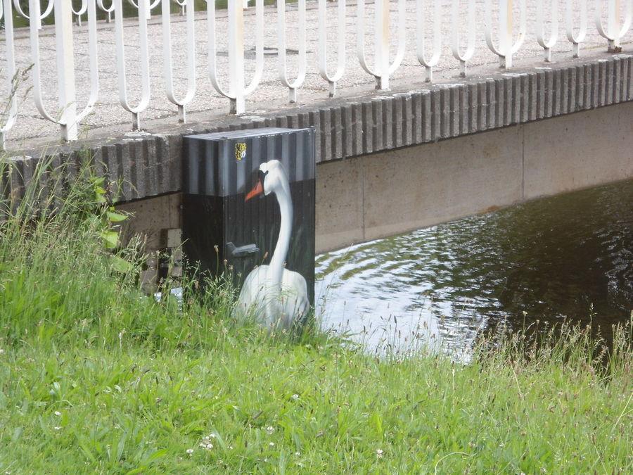 Distribution Box City Art Swan Bird Grass Animal Themes Nature Bridge Park Urban Wildlife Leipzig Adapted To The City