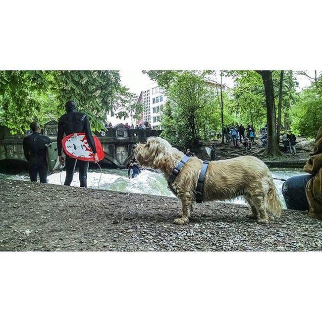 Munique. Englischergarten Animals Munichworld
