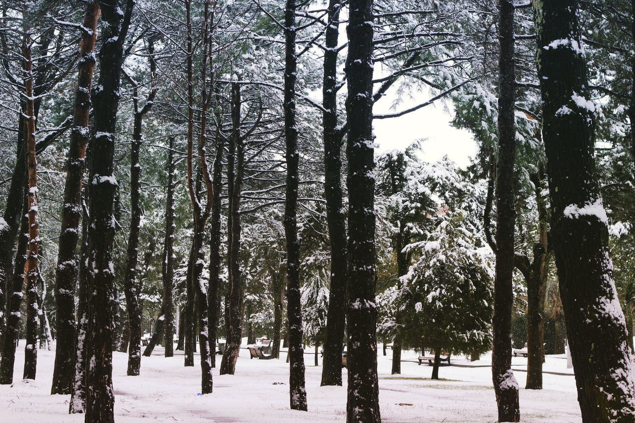 Beauty In Nature Cold Temperature Day Forest Forest Photography Landscape Nature No People Outdoors Photo Photographer Seascape Sky Snow Snowing Snowy Tree Winter
