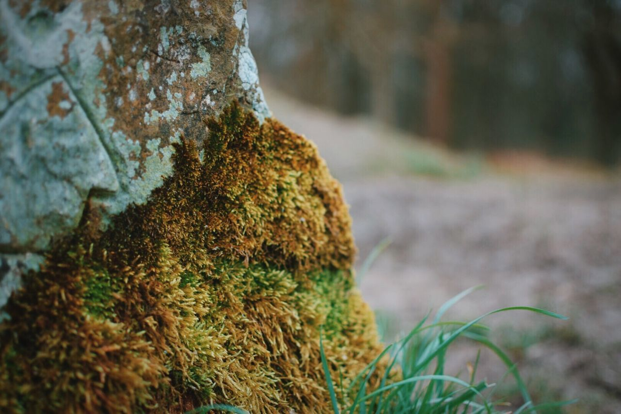 Close-up Nature Growth No People Textured  Outdoors Beauty In Nature Day Tree Grass Eyeemphotography EyeEm Gallery Eye4photography  Taking Photos Countryside Hiking Tranquility Focus On Foreground Depth Of Field